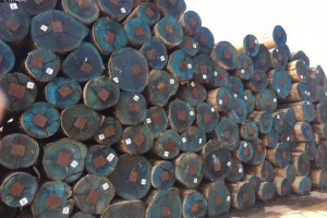 非洲微型企业支撑着非洲木材可持续贸易
