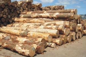 由于供应过剩,新西兰原木在中国的价格大幅下跌
