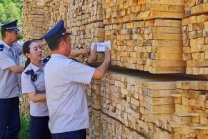 新疆石河子市林检局处理一批带疫木材