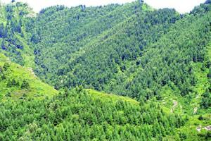 辽宁完成春季人工造林120万亩,封山育林68万亩