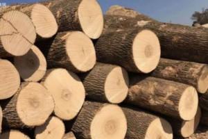 白蜡木板材的优点