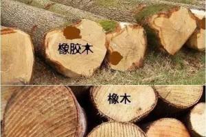 买家具——如何辨别橡木还是橡胶木?