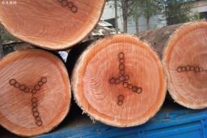 桃花芯木是什么木?桃花芯木做家具的优缺点