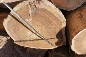 油柏木是什么木?油柏木的特点有哪些