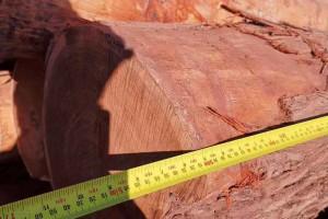 油柏木原木高清图片