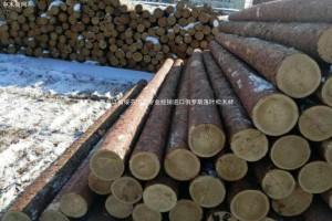2019上半年俄罗斯伊州原木和锯材出口量减少9%