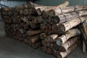 泰国森林保护志愿者披露警匪勾结走私黑幕「珍贵木材」