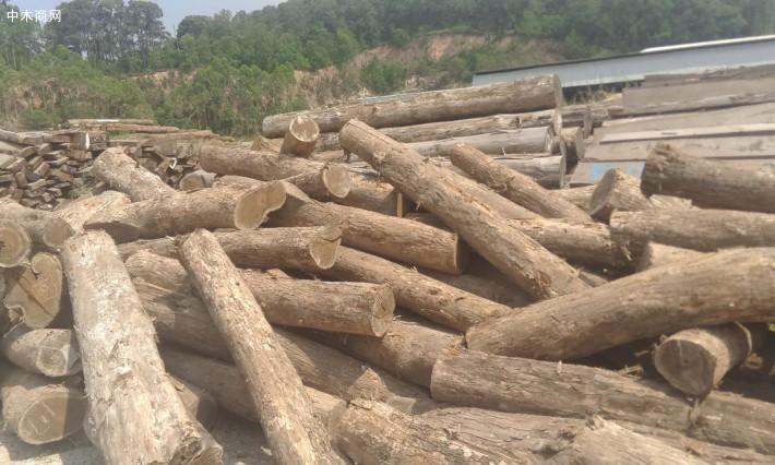 墨西哥黄金檀木材具光泽