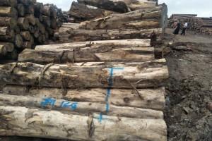 哥斯达黎加进口柏木原木批发
