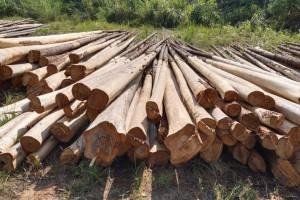产地大量供应杉木条木