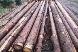欧洲云杉原木原产地直销