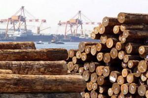 唐山建成华北最大木材专业码头