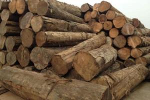 缅甸面临硬木原木销售缓慢的局面