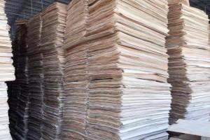杨木单板和杨木木皮生产厂家报价