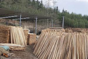 大量杉木锯木厂视频