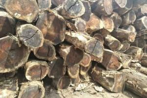 南美琥珀木原木