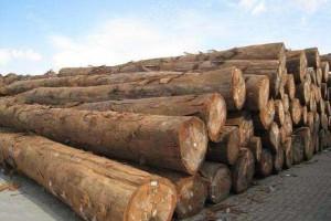 马来西亚原木出口量大幅减少