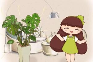 客厅首选绿植,这些盆栽养在家里,真气派
