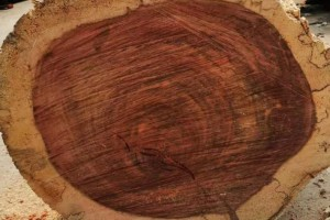哥斯达黎加进口红木