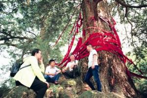 古树名木:生态奇观 巴渝瑰宝