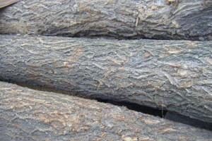 新鲜的榆木原木怎么处理才能不裂