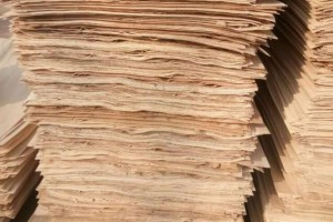 丰县诚信木业长期大量供应:杨木三拼,杨木单板,杨木皮,夹心板