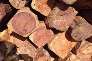 未来红木市场缅甸花梨木称王已成定局