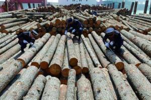 云南晋宁加强木材市场检疫监管