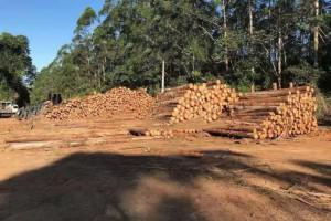 进口桉木原木,柚木原木,木削,板材产品长期供应