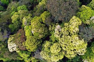 """我国科学家成功破译亚热带森林生物多样性维持""""密码"""""""
