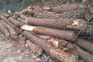 宁夏石嘴山市开展疫木检疫专项执法行动