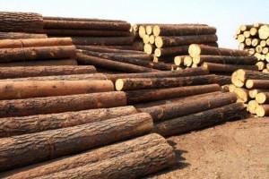 湖南邵阳隆回县全力打好木材市场搬迁攻坚战