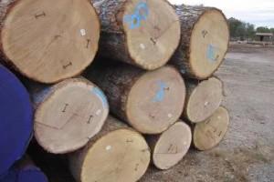 大径级美國白橡原木厂家直销