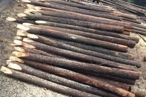 杉木桩,绿化杆