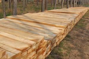 河南白杨木烘干板材多少钱一方?