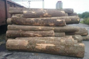 求购:白蜡木原木开板材