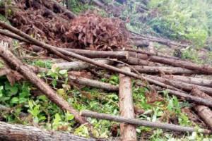 林业产业标准化国家创新联盟联盟专家委员会成立