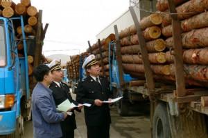 钦州对高档进口木材开展检疫执法工作