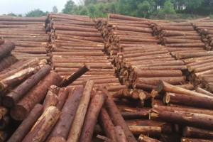 首届徐州陆港中林国际木材推介会举行