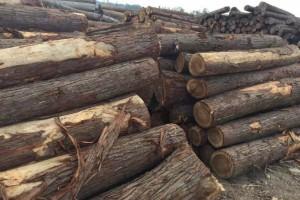 七里坑木材检查站深入木材货场开展调查宣传活动