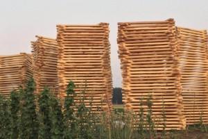 白杨木板材能做什么家具?白杨木板材做家具的优缺点