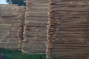 烘干河南白杨木板材多少天能烘干?烘干要多少温度合适?
