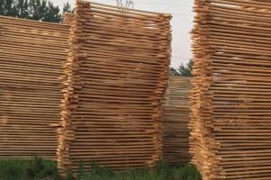 白杨木板材厂家批发价格