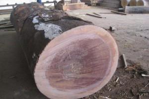 红铁木木材优缺点?非洲红铁木原木多少钱一吨?