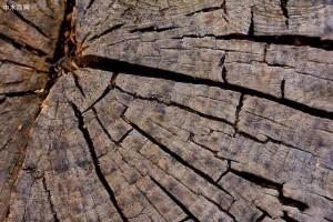 木材为什么开裂,开裂该如何处理?