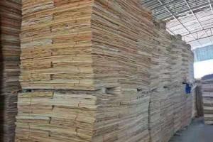 桉木木皮高清图片