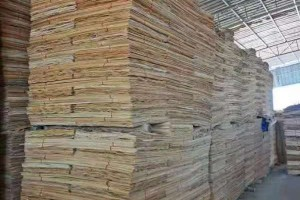 桉木木皮一级板实物细节视频
