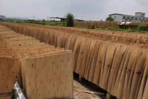 桉木木皮中级板实物细节视频