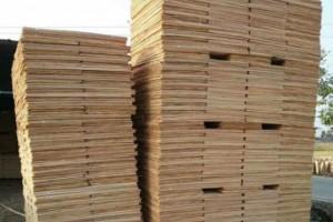 广西桉木木皮实物图片