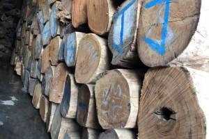 缅甸花梨木原木大方厂家批发价格